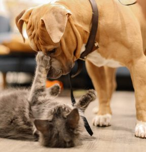 dog and cat playing together
